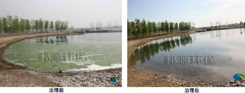 公园景观水体富营养化治理—水绵治