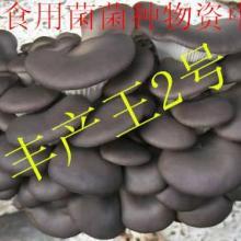 供应丰产王2号纯一代菌种 一级母种 试管首代颗粒母种、原种、栽培种