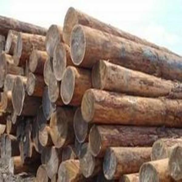 木材进口代理图片/木材进口代理样板图 (3)
