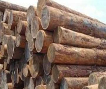 供应木材进口代理图片