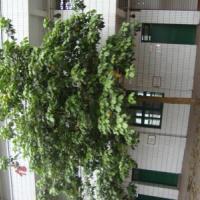 供应重庆花卉苗木基地出售重阳木