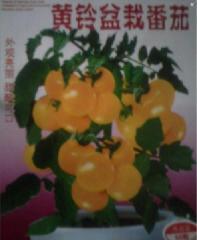 供应蔬菜种子黄铃盆栽番茄种子  外观亮丽 甜酸可口批发