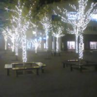 供应用于园区亮化的北京腾辉专业做节日灯圣诞树LED彩灯串灯装饰绕树灯88682836承接亮化工程