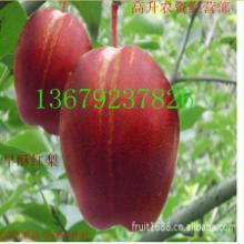 供应华冠苹果 大荔花冠苹果 花冠苹果价格