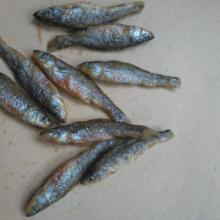 供应湖北鱼干刁子鱼餐条蓝刀鱼