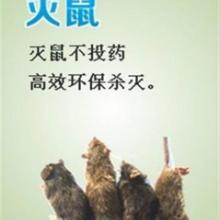 灭鼠新方法海侨公司为您创建无鼠的生活环境天津海侨灭鼠批发