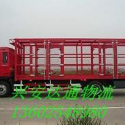 广州到上海宠物托运电话图片