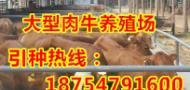 山东正祥牧业牛羊驴养殖场
