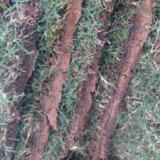 供应机器铲草坪