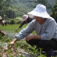 沃柑种植技术图片
