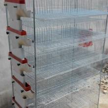 供应陕西鹌鹑笼自动养殖设备批发
