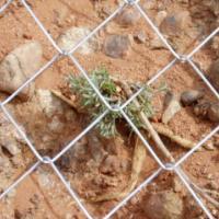 供应镀锌勾花网报价订做边坡防护铁丝勾花网报价订做