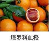 供应脐橙 果树果苗 橙子树苗 量大优惠 荔浦县旺顺苗木基地批发