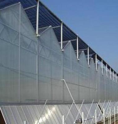 温室大棚图片/温室大棚样板图 (4)