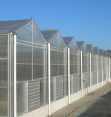 温室大棚图片/温室大棚样板图 (1)