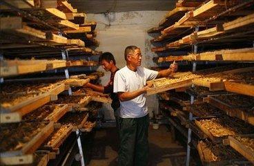 山东专业的中药材烘干机供应中药材烘干机