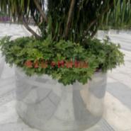供应公园不锈钢花盆 江苏不锈钢花盆厂家定做 商业中心不锈钢花盆装饰