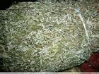 供应用于清热解毒翻白草提取物