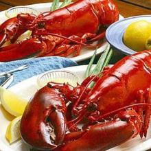供应加拿大水产鲜活龙虾价格