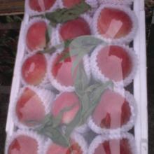 供应代理代销各种桃子