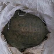 贵州100克甲鱼苗图片