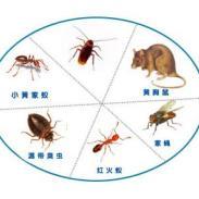 深圳木棉湾杀白蚁公司哪家好图片