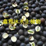供应购买水生植物种苗,首选鑫雅沐水生植物种植专业合作社
