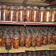 天麻蜜环菌玉米菌图片