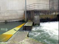 鱼道监测系统图片