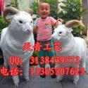 仿真绵羊模型羊年招财摆件照相道具图片