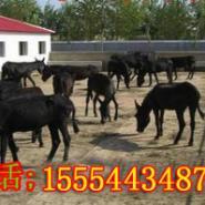 河北哪有大型肉驴养殖场图片