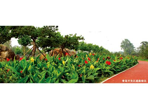 青岛声誉好的绿化工程 河北绿化工绿化工程扗