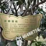 供应古典树牌