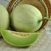 供应批发洋香瓜