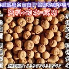 供應花魔芋魔芋種子農業產品/魔芋種子農產品商貿圖片