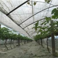 供应益阳渡锌管温室大棚8m超大葡萄园