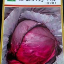 供应奇山红绣球紫甘蓝种子 上市早 颜色好 品质优  中早熟品种