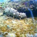 高清水下摄像机水下机器人水下录像图片