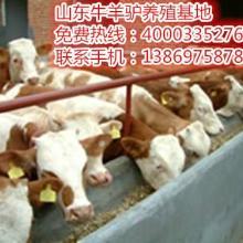 供应2015最新肉牛价格?最好的养殖牛?