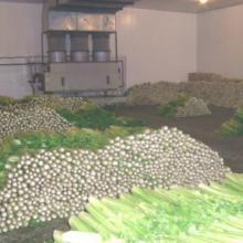 供应蔬菜保鲜冷藏